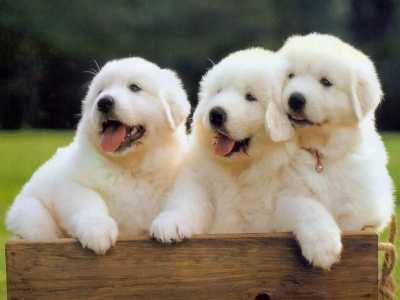 梦见狗好吗 梦见狗代表什么
